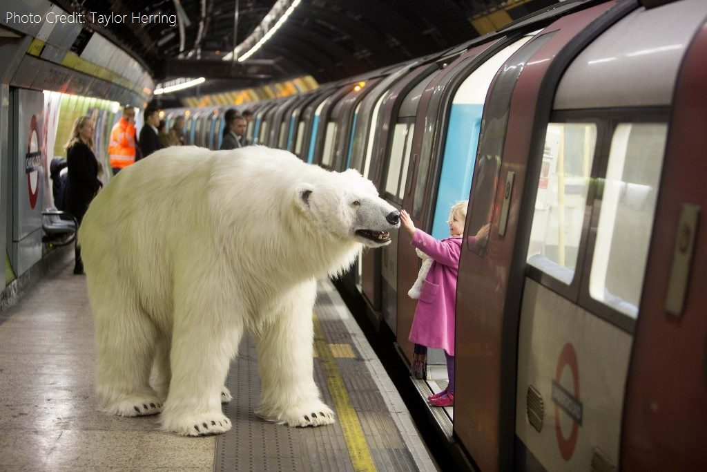 Polar bear on the Tube - Journalist & the Polar Bear